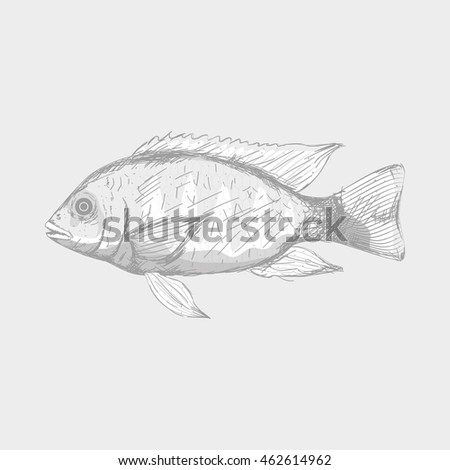 Isolated sketch of a fish, Vector illustration