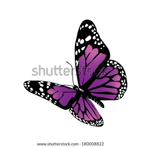 Isolated vector butterfly on a white background - stock vector