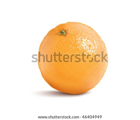 isolated vector orange