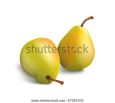 isolated vector pears - stock vector