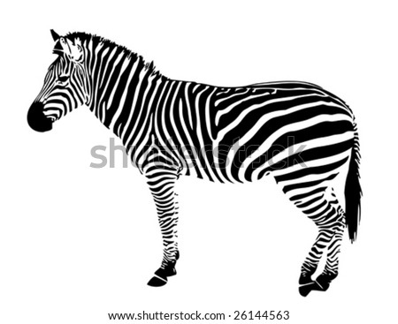 isolated zebra silhouette texture detail - stock vector