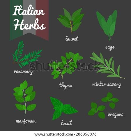 Italian culinary herbs set. Oregano, rosemary, green basil, laurel, sage, marjoram, winter savory, thyme. - stock vector