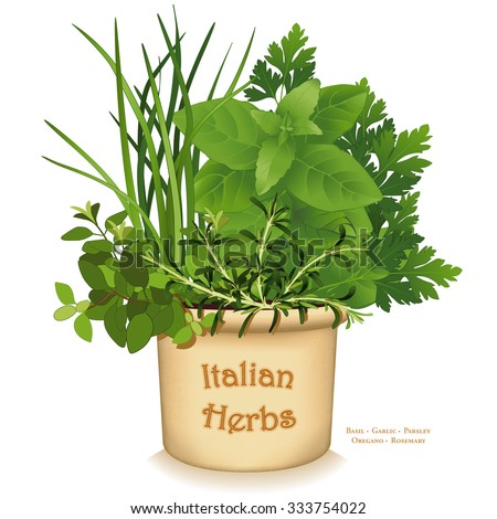 Italian Herb Garden Planter, traditional flavors for Mediterranean cuisine, Oregano, Garlic Chives, Sweet Basil, Flat Leaf Parsley, Rosemary, in clay flowerpot, isolated on white. EPS8 compatible.