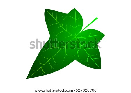 Image result for ivy leaf