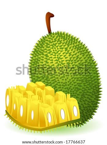 Jackfruit Stock Vectors Images amp Vector Art Shutterstock