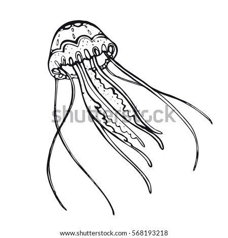 jellyfish hand drawn inhabitant of the underwater worldsimple linear picture jellyfish