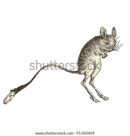 """Jerboa - vintage engraved illustration - """"Histoire naturelle"""" by Buffon and Lacepe  ed. Alfred Mame - Tours 1881 - stock vector"""