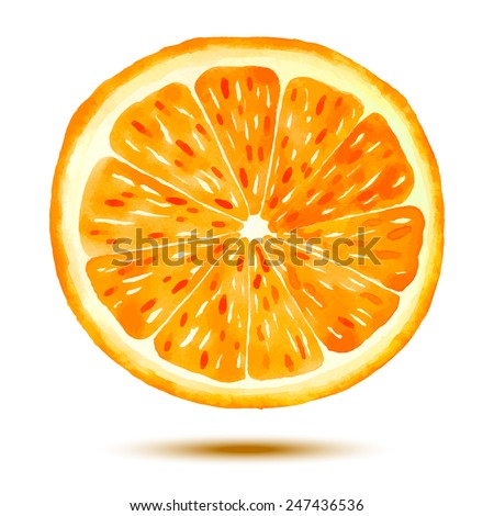Juicy Orange with Shadow on the White Background. Vectorized hand drawn watercolor image - stock vector