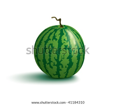 juicy watermelon - stock vector