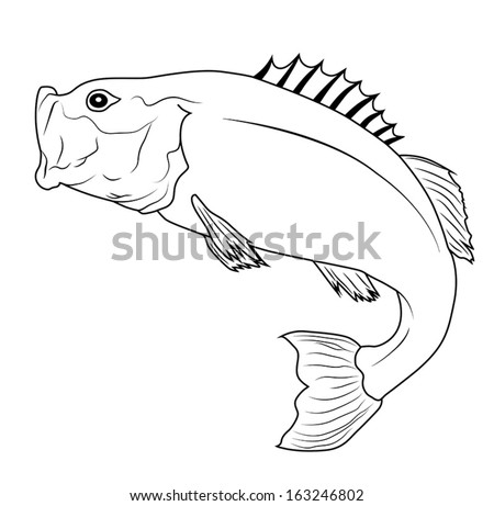 Jumping Bass Fish Outline Illustration - stock vector