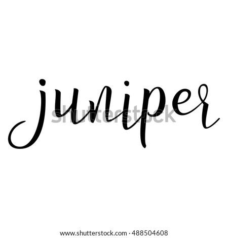 Juniper Calligraphic Text Cooking Spice Typographic Stock Photo