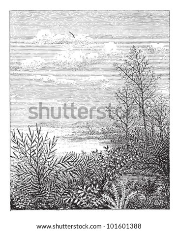 Jurassic Period, showing landscape, vintage engraved illustration. Dictionary of Words and Things - Larive and Fleury - 1895