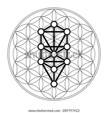 Kabbalah, 12 Sephiroth, tree of life, flower of life - stock vector