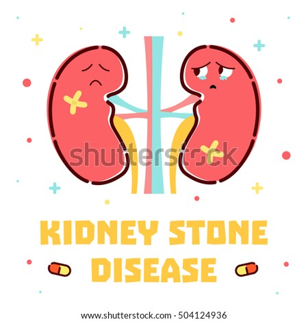 human kidney stock images, royalty-free images & vectors, Muscles