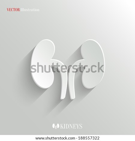 Kidneys icon - vector web illustration, easy paste to any background - stock vector