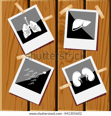 kidneys, liver, spermatozoon, lungs. Medical set. Photo frames on wooden desk. Vector icons. - stock vector