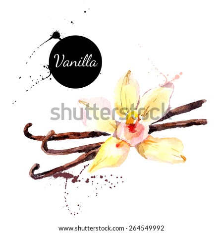 Kitchen herbs and spices banner. Vector illustration. Watercolor vanilla - stock vector