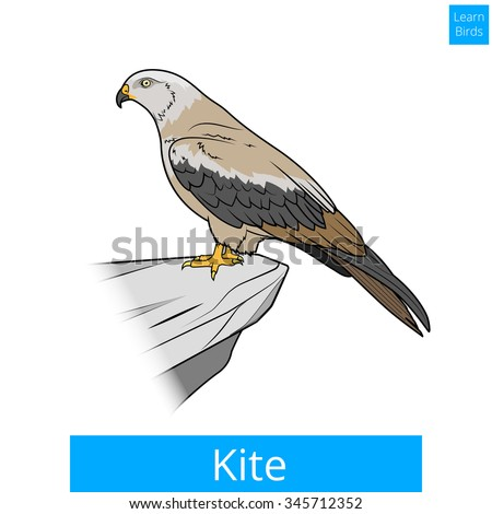 Sparrow Silhouette Flying Kite Bird Stock Images...