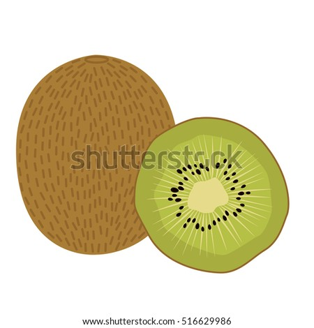 Kiwi fruit vector illustration. Sliced juice kiwi on the white background