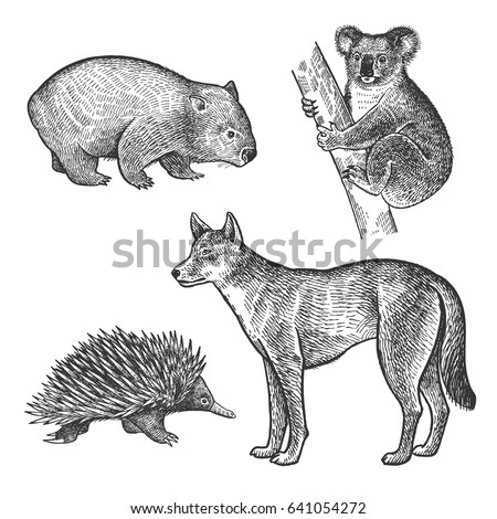 koala bear wombat echidna dingo dog hand drawing set animals of australia