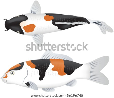 Koi carp side and top views - stock vector