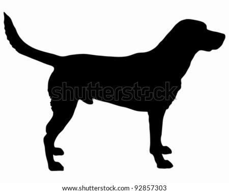 Labrador silhouette - stock vector