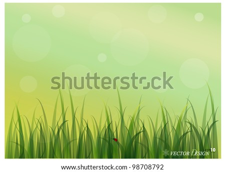 Lady bug and Fresh spring green grass background. Vector illustration. - stock vector