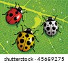 Ladybugs - stock vector
