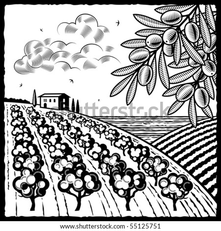 Landscape with olive grove black and white. Vector - stock vector