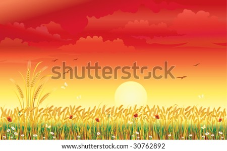 Landscape with wheat under sunrise
