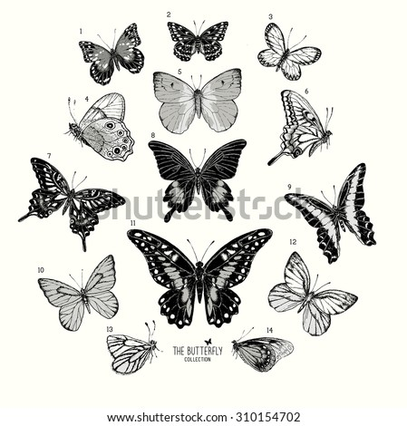 Large Collection of Butterflies, hand drawn set isolated.Vector illustration - stock vector