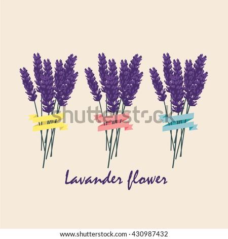 Lavender flower floral background colorful - stock vector