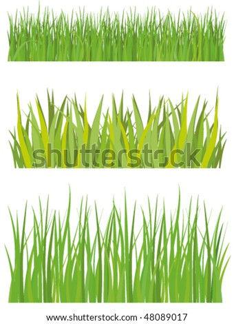 Lawn and grass - stock vector