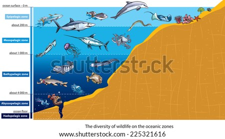 Layers of the ocean (deep sea creatures). - stock vector
