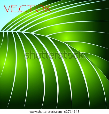Leaf. A plant. A vector illustration for your working out. - stock vector