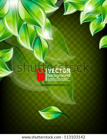 leaf abstract vector design eps10