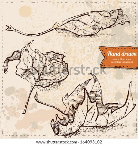 Leaf set  in vector on vintage background, leaves hand drawn, realistic sketchy illustration isolated - stock vector