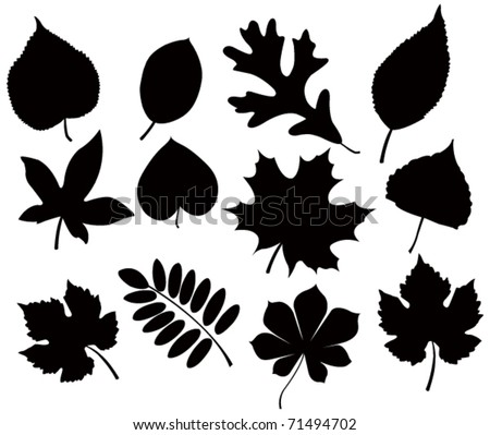 leaf silhouettes - stock vector