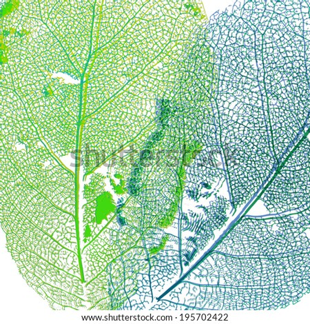 leaf structure macro skeleton - stock vector