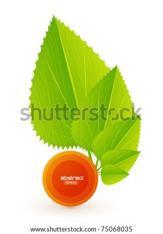 Leaf vector eps10 design - stock vector