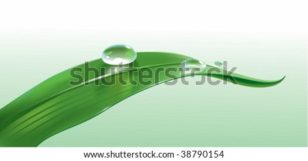 leaf with droplets - stock vector