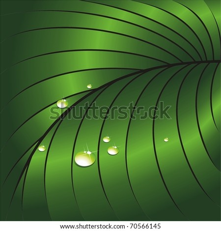Leaf with water droplets. Large species. Vector illustration. - stock vector