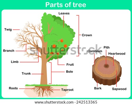 leaning parts tree kids worksheet stock vector royalty. Black Bedroom Furniture Sets. Home Design Ideas