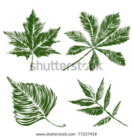 leaves collection with reflection - stock vector
