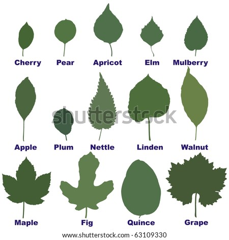 leaves from trees and plants - stock vector