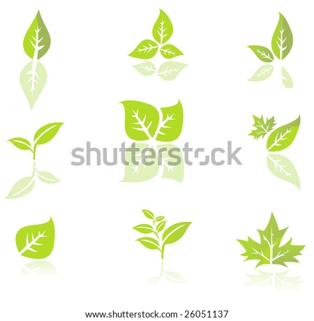 Leaves isolated on a white background - stock vector
