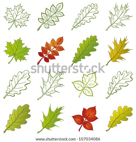 Leaves of different plants, set of nature objects and pictograms - elements for design. Vector - stock vector