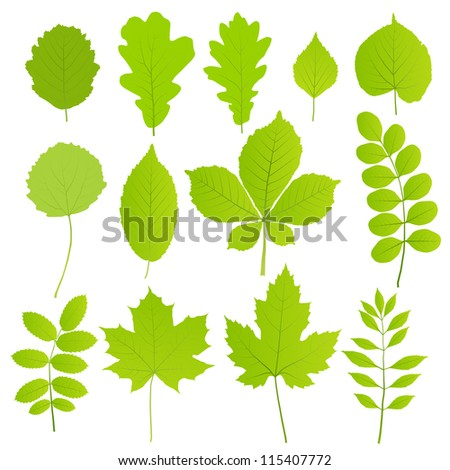 Leaves set of trees isolated on white background