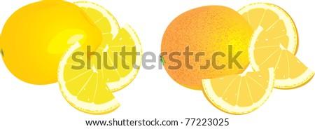 Lemon and orange. Vector - stock vector