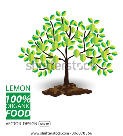 Lemon, fruits vector illustration. - stock vector